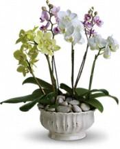 trioorchids.jpg